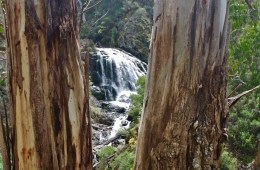 Follow The Old, Hand-Drawn Map // Buddong Falls (NSW) Cara van Wyk, waterfall, tree trunks, framed, glimpse