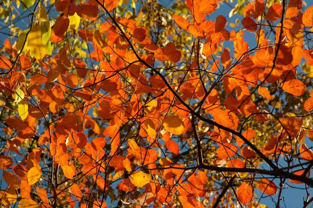 Bright autumn leaves on tree - inspired by change