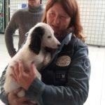 adopteer hond pup adoptie