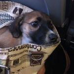 cabine hond vliegtuig draagtas draagmand