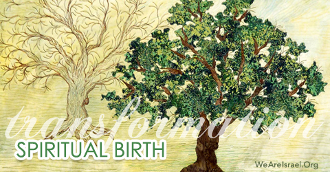 spiritual birth, transformation, born again,What does it mean to be born Again in Hebrew roots, Passover and the second birth, born again series, John 3, Exodus 12 48, Genesis 18 14, Ger Stranger, Ezrach, native born, born in the land, second birth
