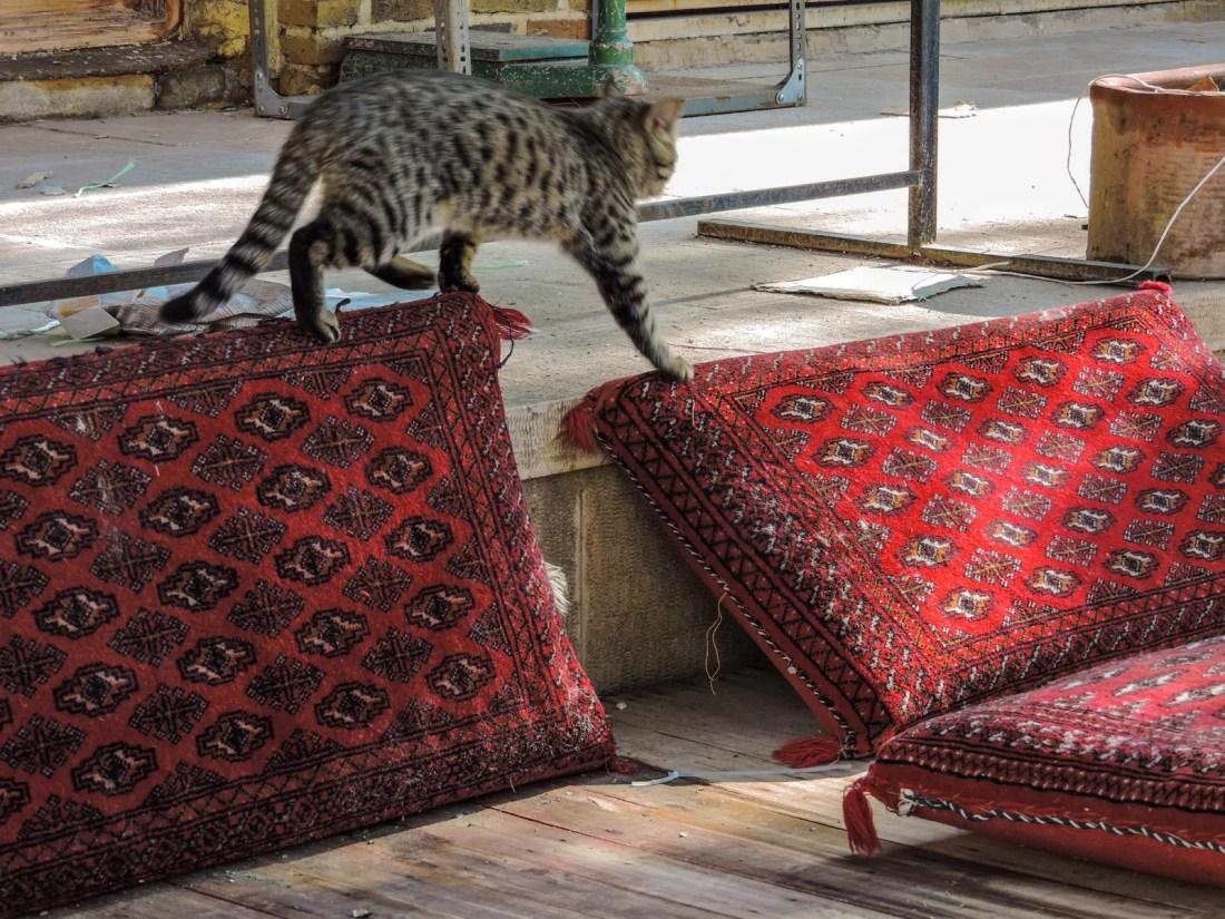 un gatto si muove furtivamente tra cuscini dentro un bellissimo ostello a Yazd