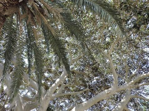 le palme fanno da riparo e placano il caldo del mezzogiorno in Sicilia