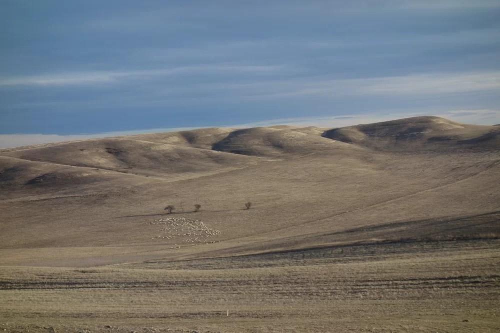 Paesaggio nei pressi di Udabno