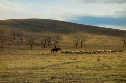 pascolo di pecore lungo la strada che porta a Davit Gareja