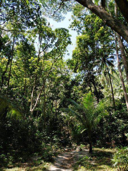 La natura di Apo Island nelle Filippine