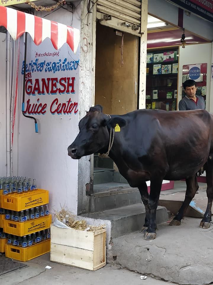 Una mucca davanti al negozio della Sony a bangalore