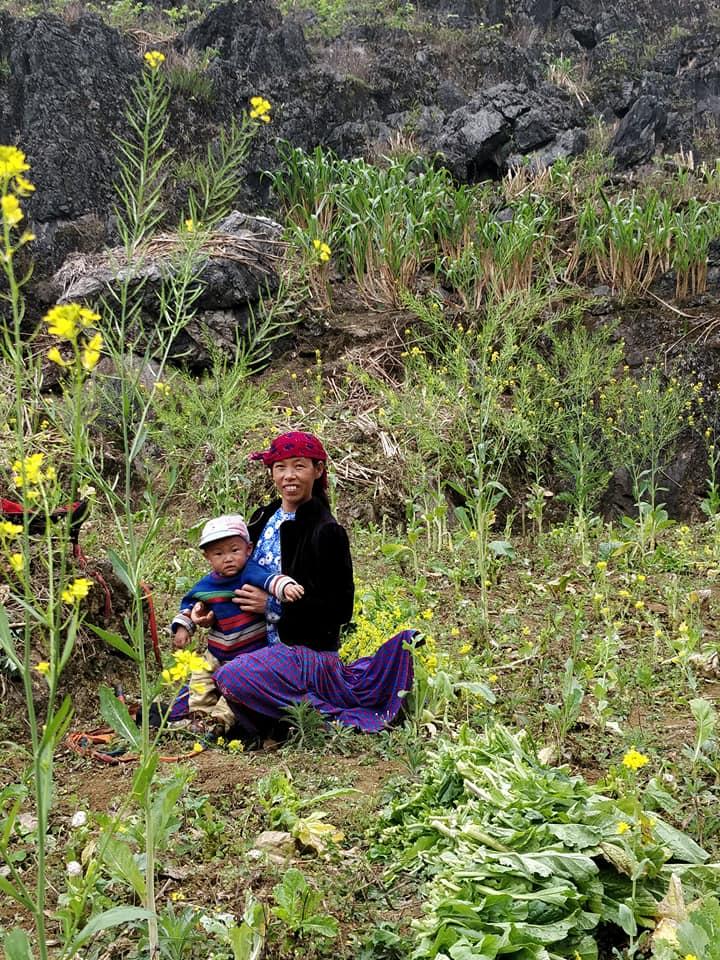 famiglie raccolgono fiori ad Ha Giang in Vietnam