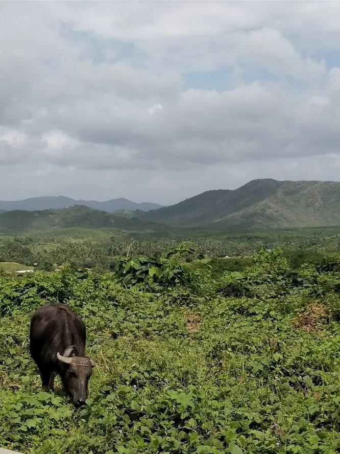 Vista nei pressi di Puerto Princesa