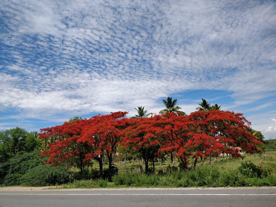 Fioritura e cieli tersi nel Wayanad in india