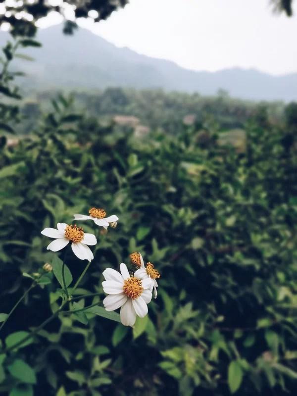 Ha Giang è sinonimo di semplicità e natura maestosa