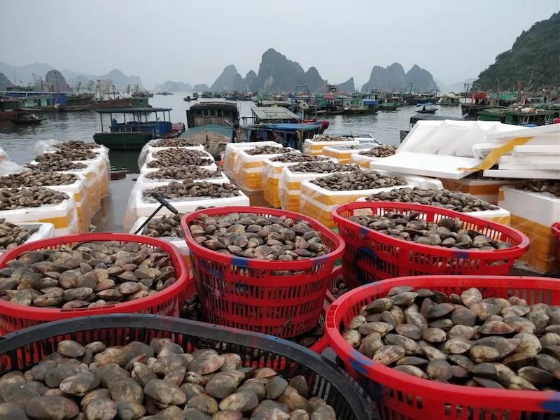 Cai Rong Vietnam