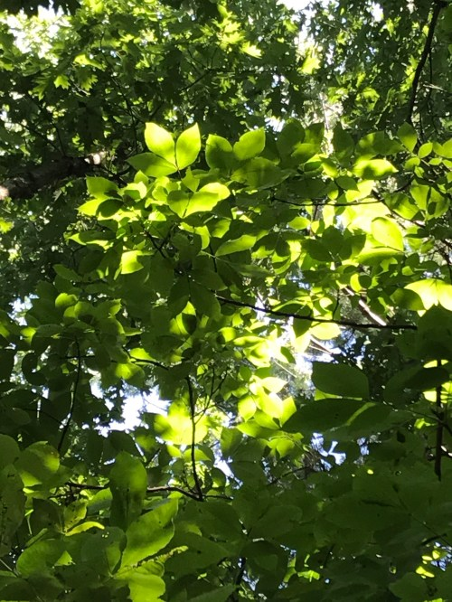 INSTA Tree tops.jpg