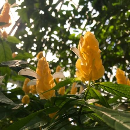 Garfield Park Conservatory Yellow Flowers