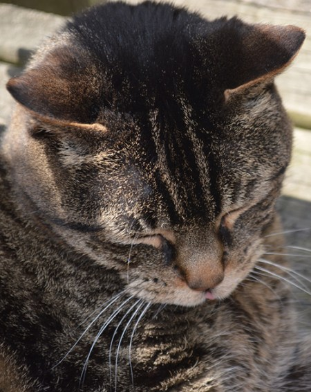 Pete Cat REVISED
