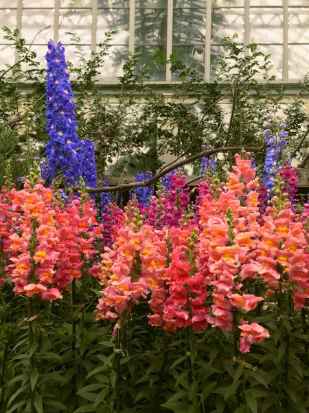 Garfield Park Conservatory Pink Purple Flowers REVISED.jpg