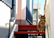 cat of Reykjavik