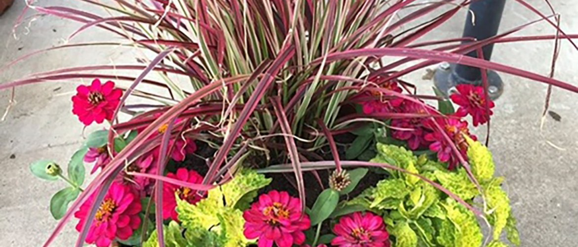 Texas-Tough container gardens Plants, pots, and a pro's tips that are unfazed by heat and drought