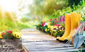 Common Answers to Common Landscaping Questions