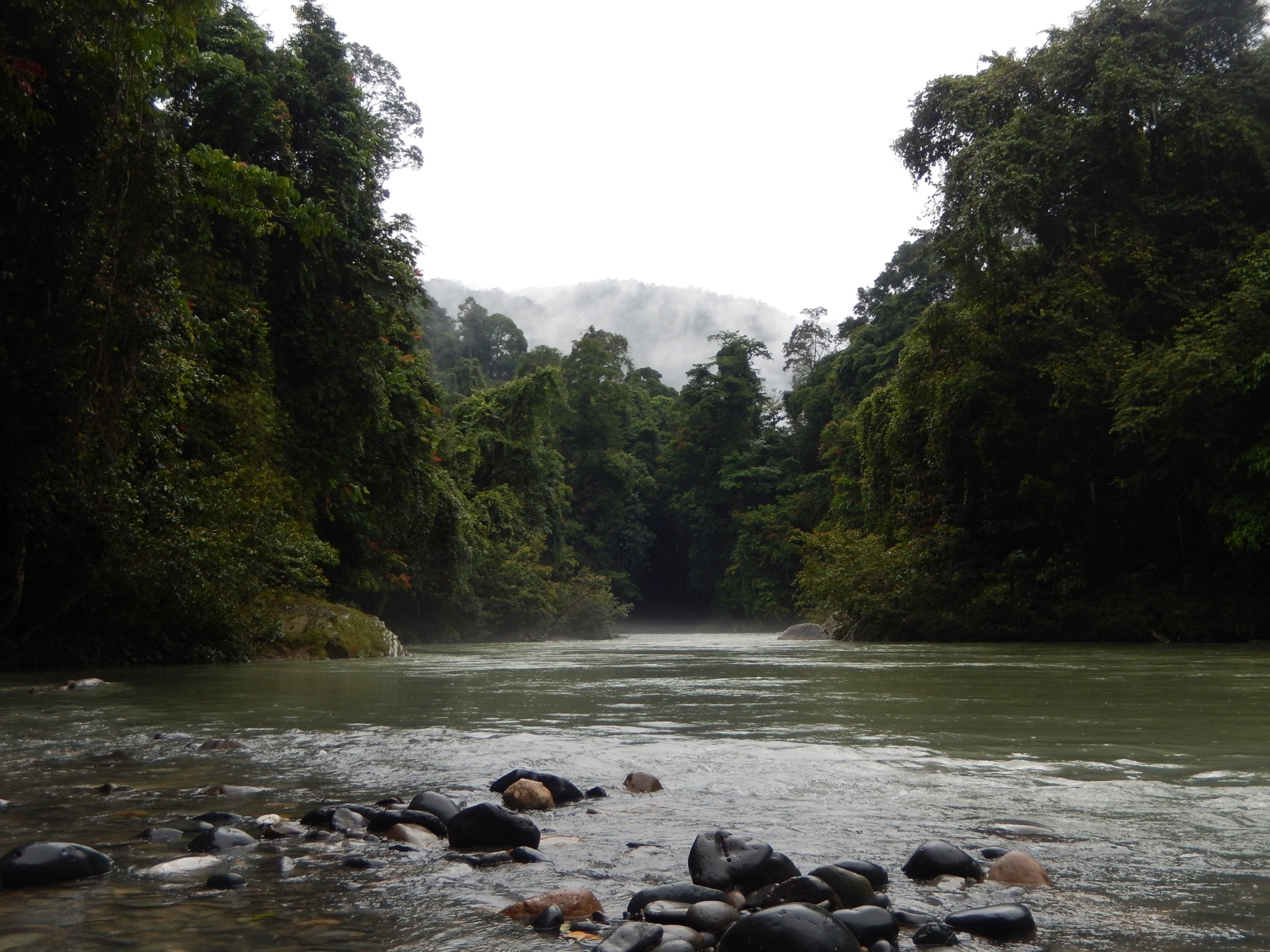 Sumatra Jungle River