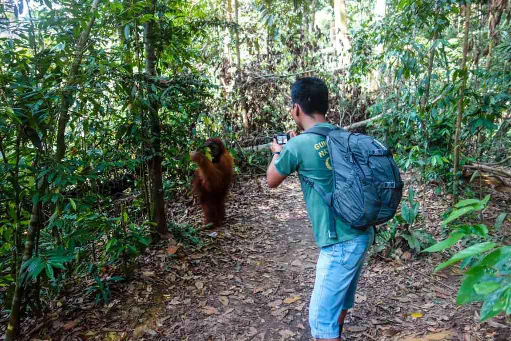 Orangutan trekking Sumatra