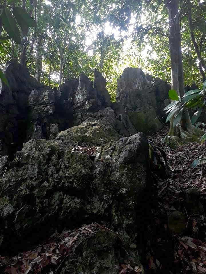 Karst Forest Batu Katak