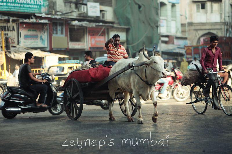 Zeynep Mumbai