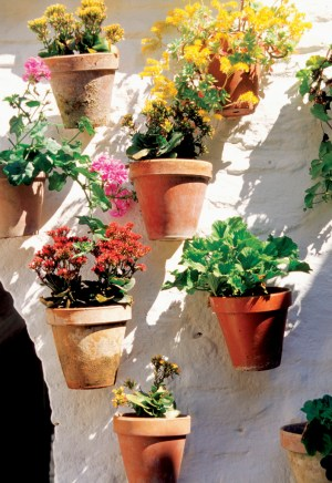 Colorful flowers in clay flowerpots hanging on wall of building in Cordoba, Spain
