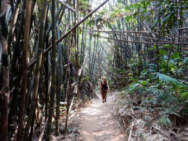 Wandelen tijdens de Gibbon Experience in Laos
