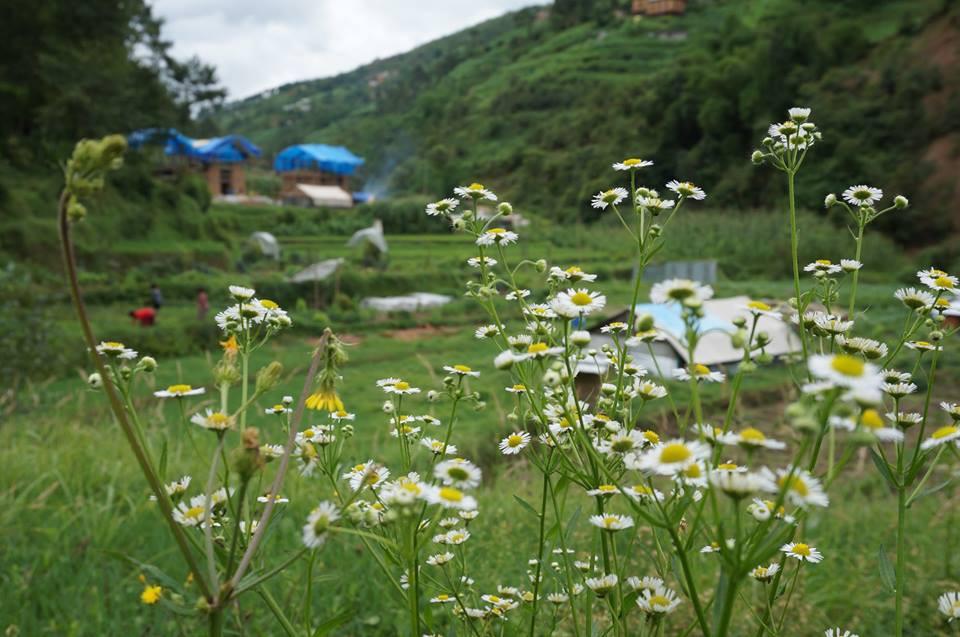 Biologische boerderij Herb Nepal in aanbouw