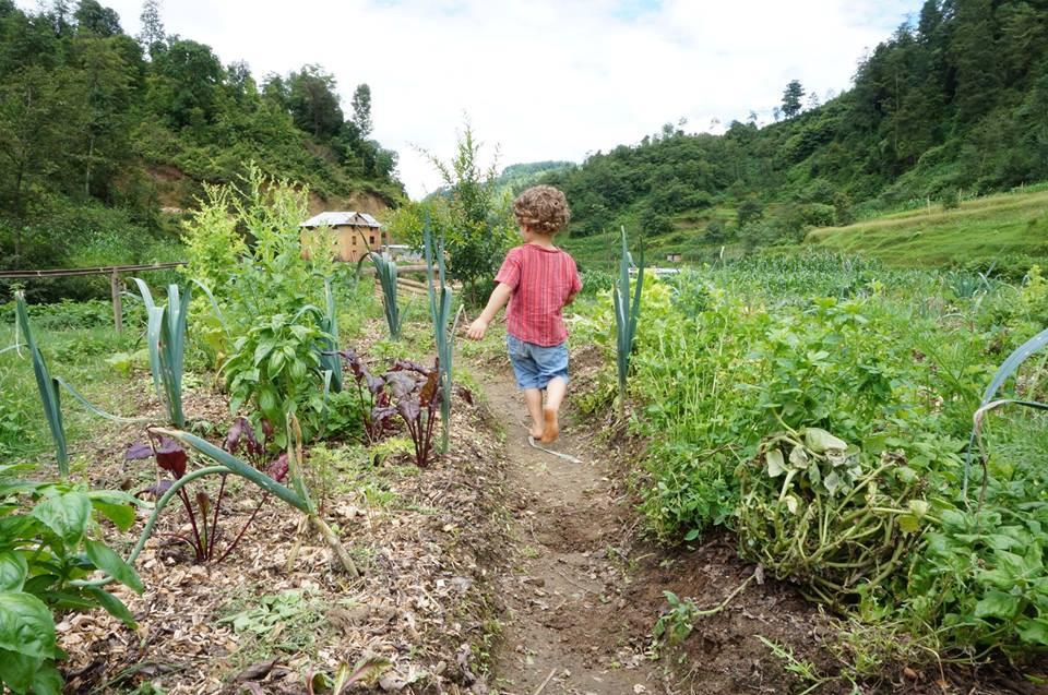 De biologische boerderij Herb Nepal