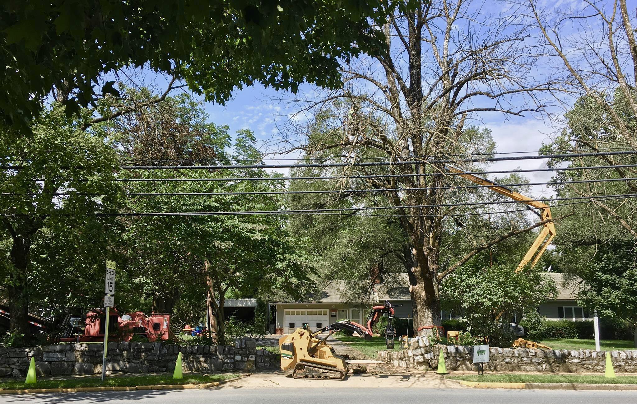 Viking Tree LLC