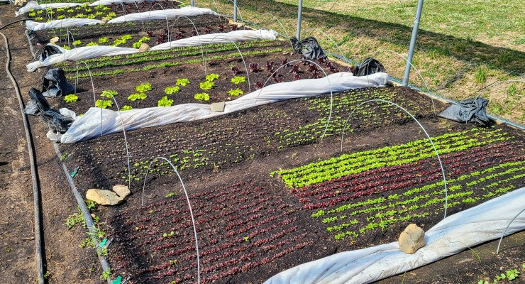 Covered beds at Red Hawk Rise Organics help regulate temperature.