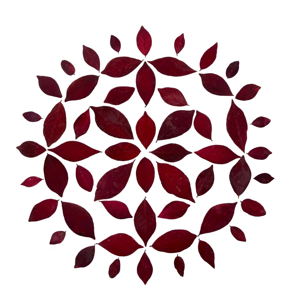 BURNING BUSH MANDALA explores the endless pattern configurations of this particular leaf shape and references a mandala as a meditation aid.  It can also suggest folk art similar to Pennsylvania Dutch hex signs.