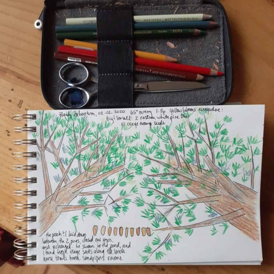 an open page in a nature journal below a collection of colored pencils and othe craft materials used for sketching.