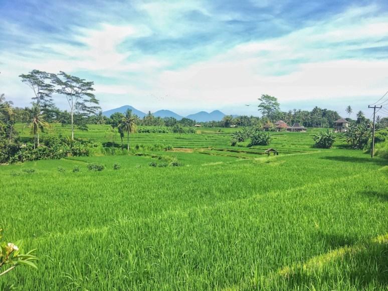 ubud-bali-things-to-do-we-are-travel-girls-17