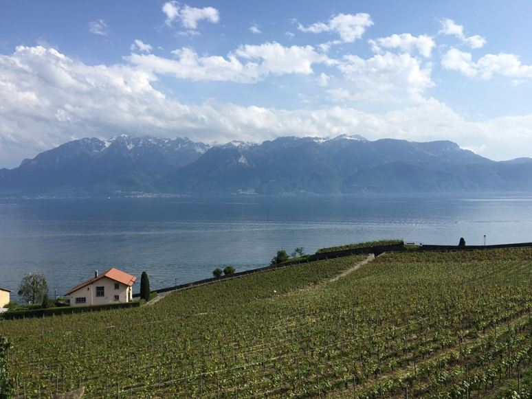rivaz-switzerland-lavaux-vineyard-terraces