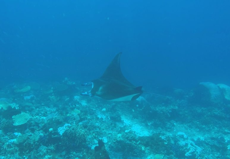 5-Reasons-To-Explore-Komodo-National-Park-Komodo-diving2