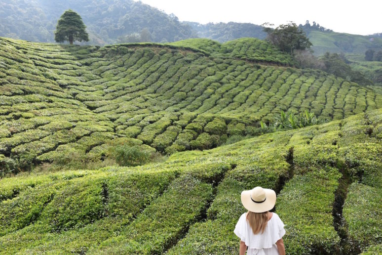 things-to-do-cameron-highlands-malaysia-6
