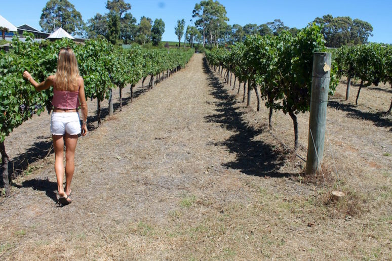ON THE ROAD IN MARGARET RIVER, AUSTRALIA Feature-option1