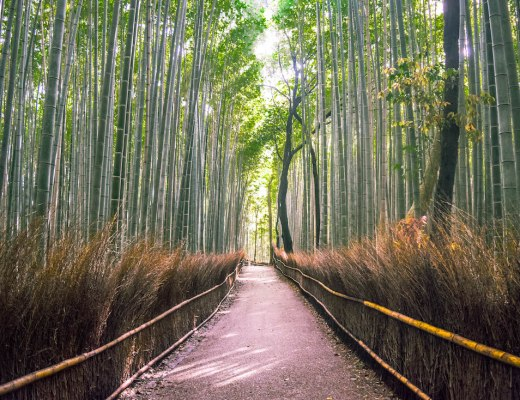 5 FUN THINGS TO DO IN KYOTO