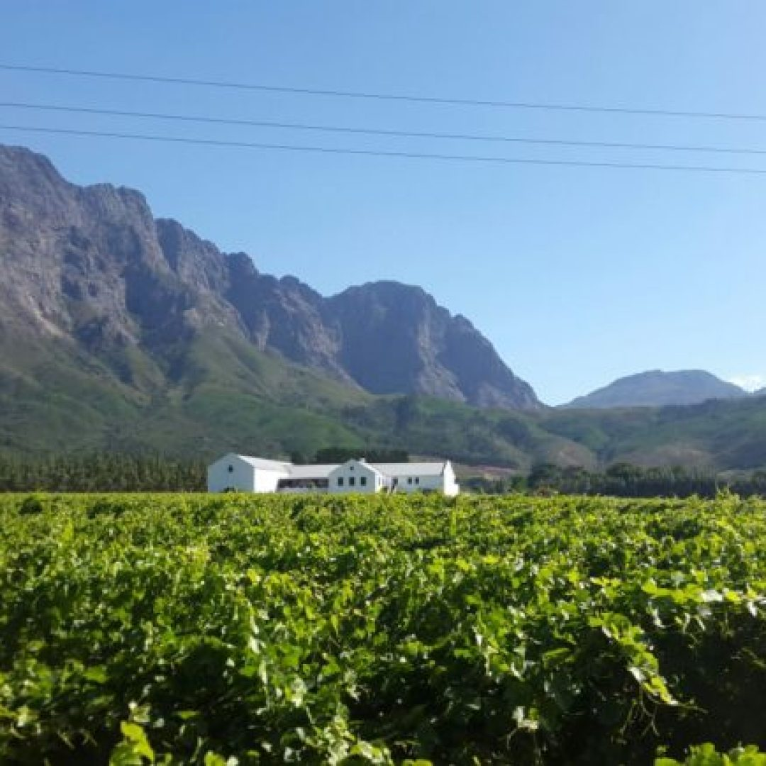 Cape-Town-Vineyard-Franschhoek 10 AWESOME THINGS TO DO IN CAPE TOWN, SOUTH AFRICA
