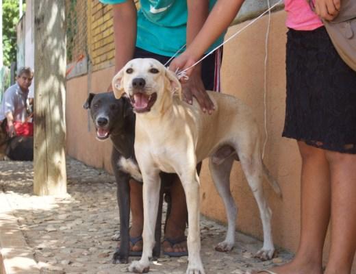 Volunteering At Esteriliza Y Educa In Mexico Helping Stray Animals