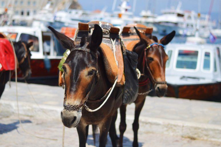 greecehydradonkey HIDDEN GEMS OF GREECE- HYDRA AND POROS ISLAND