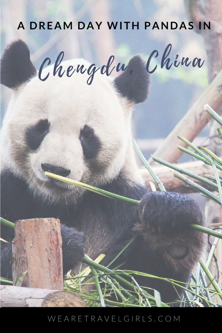 A DREAM DAY WITH PANDAS IN CHENGDU CHINA