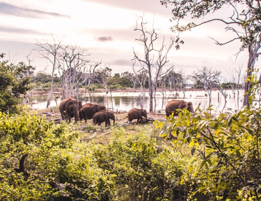 COMPLETE GUIDE TO YALA NATIONAL PARK SRI LANKA