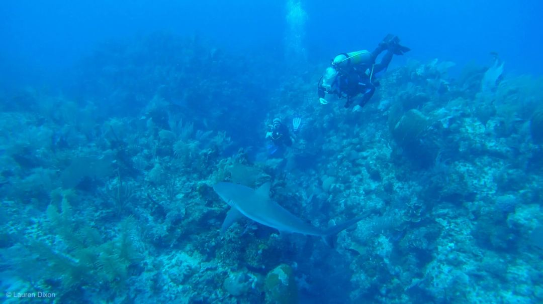 5 Reasons to Become a Certified PADI Open Water Diver