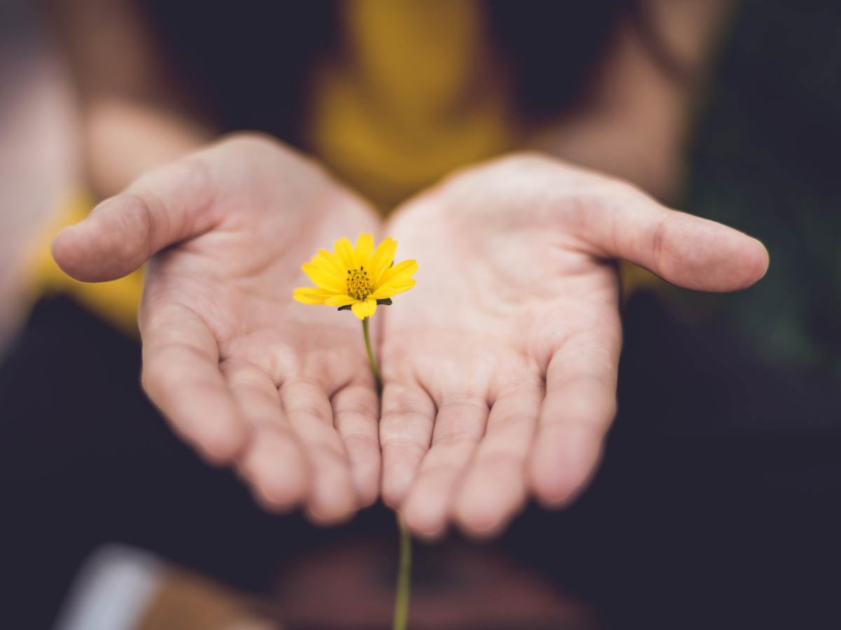 A flower in a hand