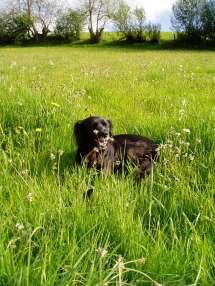 Bella in a field of flowers