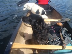 Bella was a far more chilled boat passenger than Marley